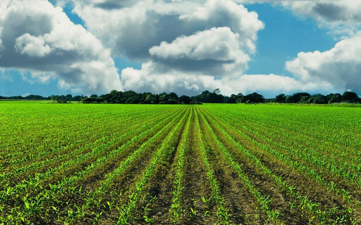 Green-Organic-farm